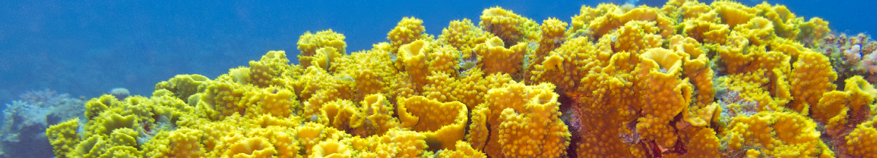 Yellow coral underwater - Quantum Mechanics To Unlock The Secrets of Coral